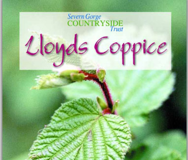 lloydscoppice