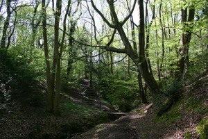 Benthall Edge Wood