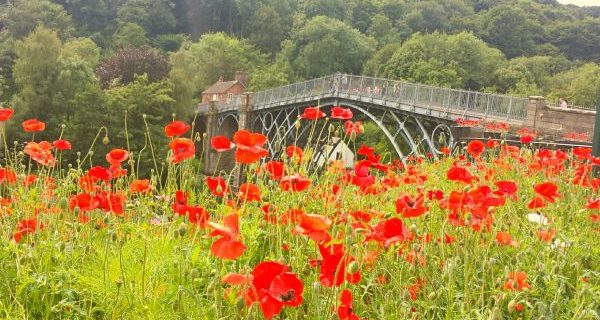 Poppies and the Iron Bridge - Sam Vickers