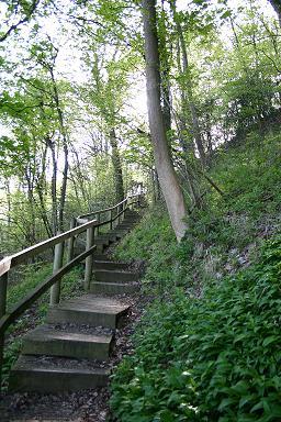 Benthall Edge Wood