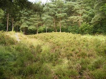 Crostan heathland