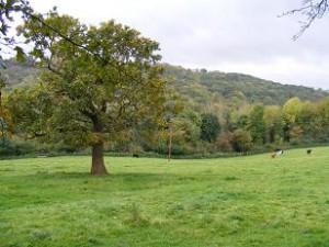 Haywood Pastures