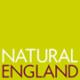 NE logo green