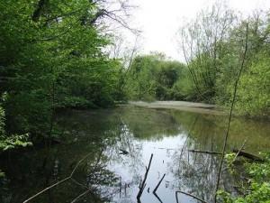Sutton Wood