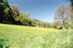 hay meadows 1 of 1